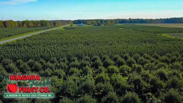 aerial orchard (1).jpg