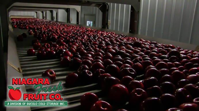 Apples in drying room (1 of 1).jpg