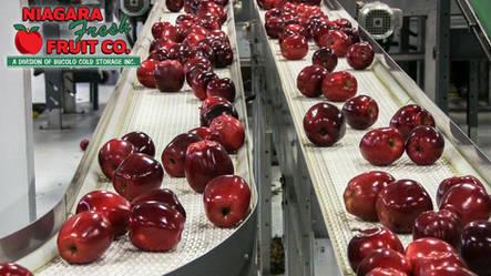 Apples on beltway (1 of 1).jpg