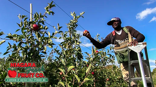 Apple picking in orchard with logo.jpg