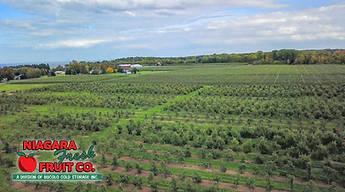 Orchard aerial (3) w logo.jpg