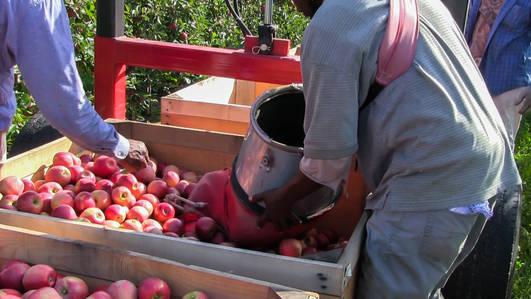 Apples in fields drop off (1 of 1).jpg