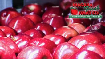 Apples close-up   Niagara Fresh Fruit