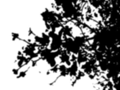Abstract flowers B&W.jpg