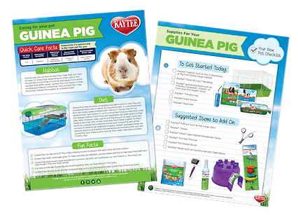 Guinea Pig Fact Sheet Design