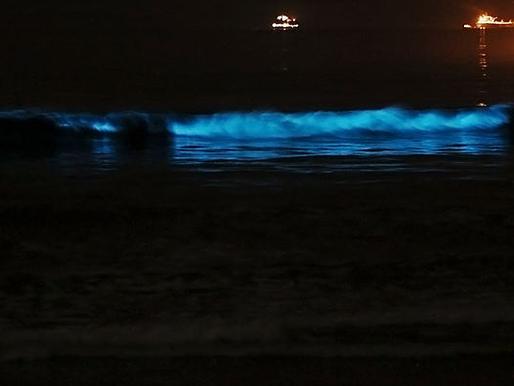 Organismos planctônicos bioluminescentes
