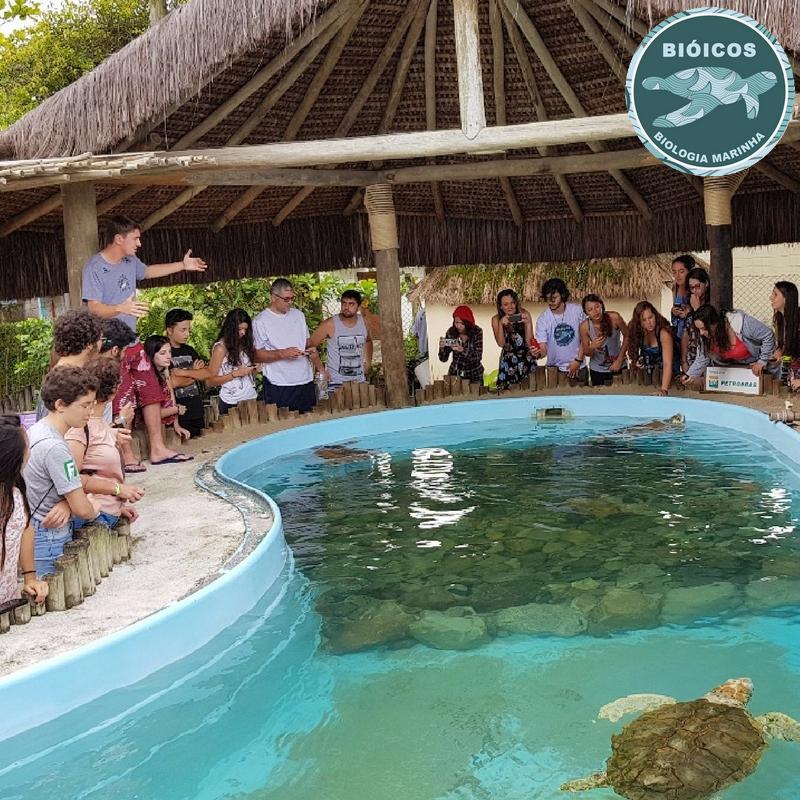 Imagem mostrando os alunos fazendo uma visita no projeto Tamar. Há uma piscina azul com algumas pedras no fundo e 3 tartarugas dentro. Em volta da piscina, o instrutor está explicando sobre as tartarugas aos visitantes. Uma parte da piscina é coberta por um telhado feito de madeira.