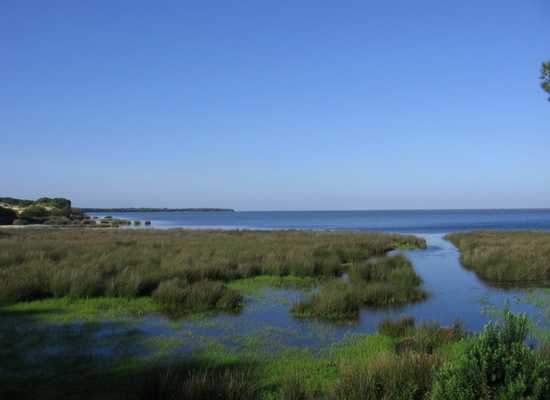 Imagem mostrando uma área úmida com uma vegetação sobre a água, com um canal aberto do lado direito levando em direção ao mar aberto no fundo.
