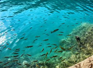 Foto vista de cima de um corpo d'água transparente em que podemos observar vários peixes nadando.