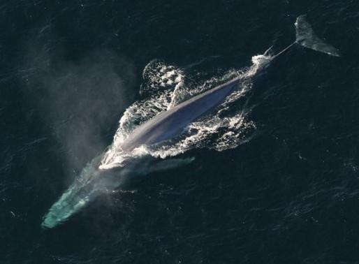 Baleia à vista – baleias do Brasil