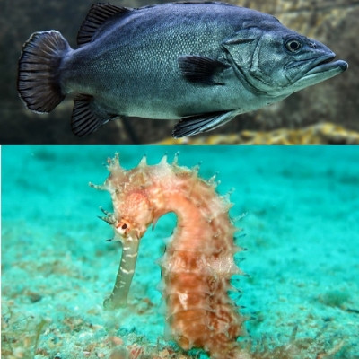 Na parte superior um peixe ósseo e na parte de baixo um cavalo marinho.