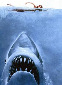Tubarão avançando em direção a uma nadadora.