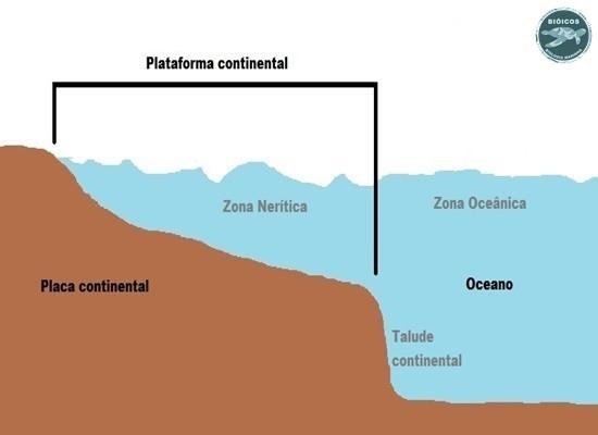A ilustração mostra a esquerda uma placa continental com o formato de um morro inclinado. Cobrindo parte desse morro há água do mar. Indica também a plataforma continental a zona nerítica e a zona oceânica e o talude continental.