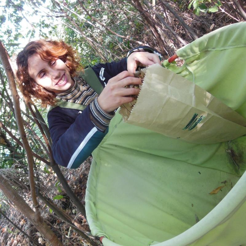 Foto de uma pessoa com um saco de papel na mão, guardando a serrapilheira que foi coletada em um saco verde maior logo abaixo. Ao fundo há várias árvores.