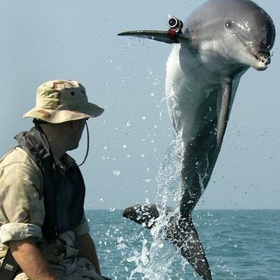 Foto de um golfinho pulando para fora d'água, em sua nadadeira direita há uma câmera fixada. Do lado esquerdo da foto, há uma pessoa observando esse golfinho.
