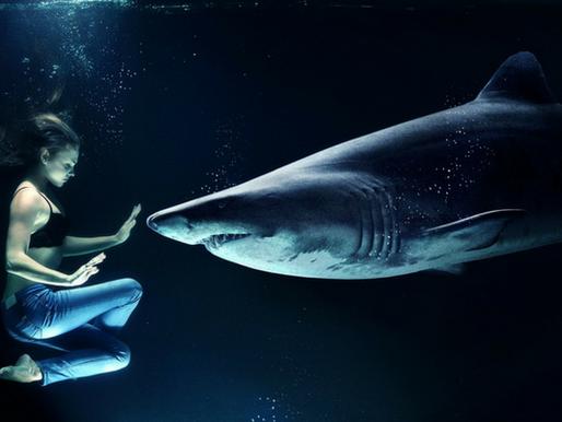 Ataque de tubarão a seres humanos: um medo que deve ser desmistificado!