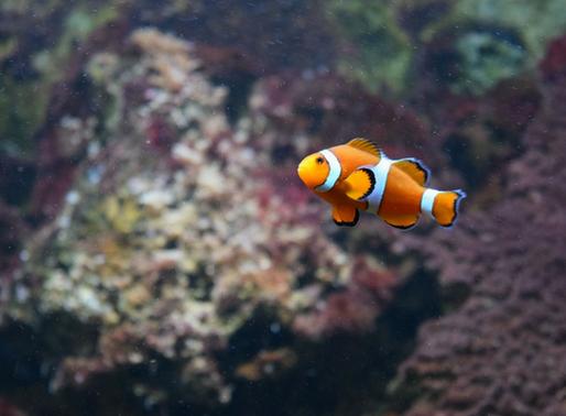 Determinação sexual em espécies marinhas