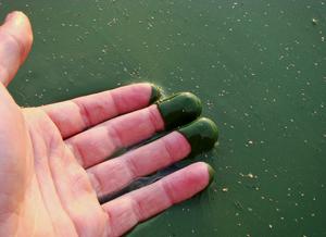 Foto da máo de uma pessoa com as pontas dos dedos na água, cuja coloração está esverdeada.