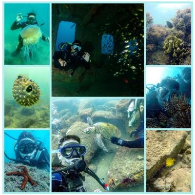 Descrição das imagens da esquerda para a direita e de cima para baixo. Mergulhador com alga viva; baiacu; mergulhador com estrela do mar; mergulhador dentro de um navio abandonado e vários peixes ao redor; dois mergulhadores e uma tartaruga marinha; parte de um recife de coral; mergulhador no recife de coral; peixe no coral.