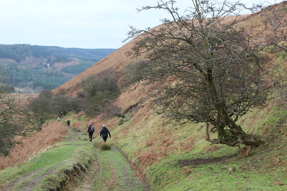 Path towards Skelton tower, Hole of Horcum, North York Moors National Park