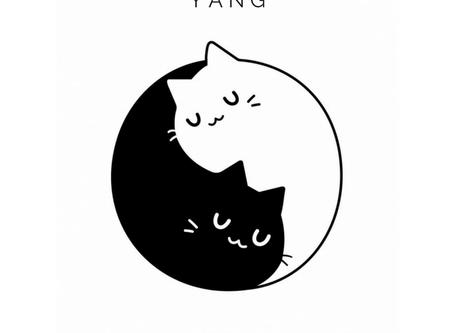 Le Yin Yang c'est quoi ?