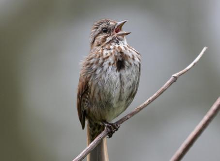"Bird ""Pump Up"" Jams"