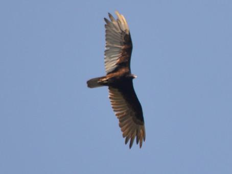 Birds Named For Birds List