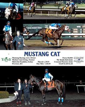 Mustang Cat 3.1.19.jpg
