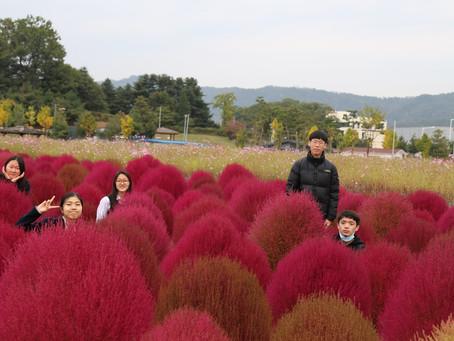 2020.10.16 나리농원 꽃나들이