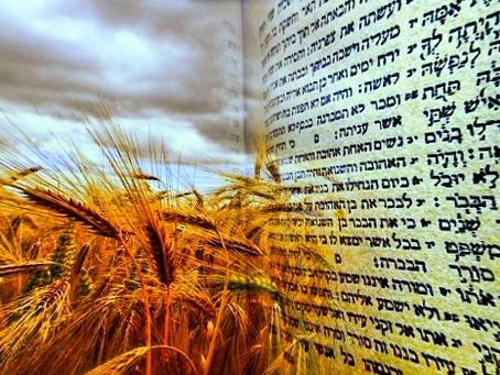 Дни Омера – дни духовного совершенствования