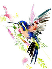 Colibri DAD.jpg