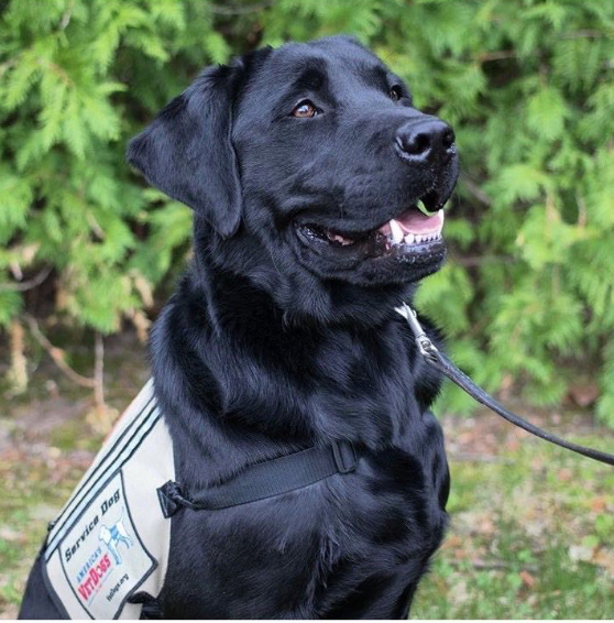 Service dogs improve the lives of veterans with PTSD - this is how