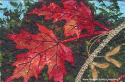 Maple Branch
