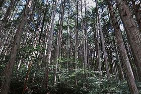 銘木の地、木曽