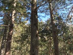 森に生かされている