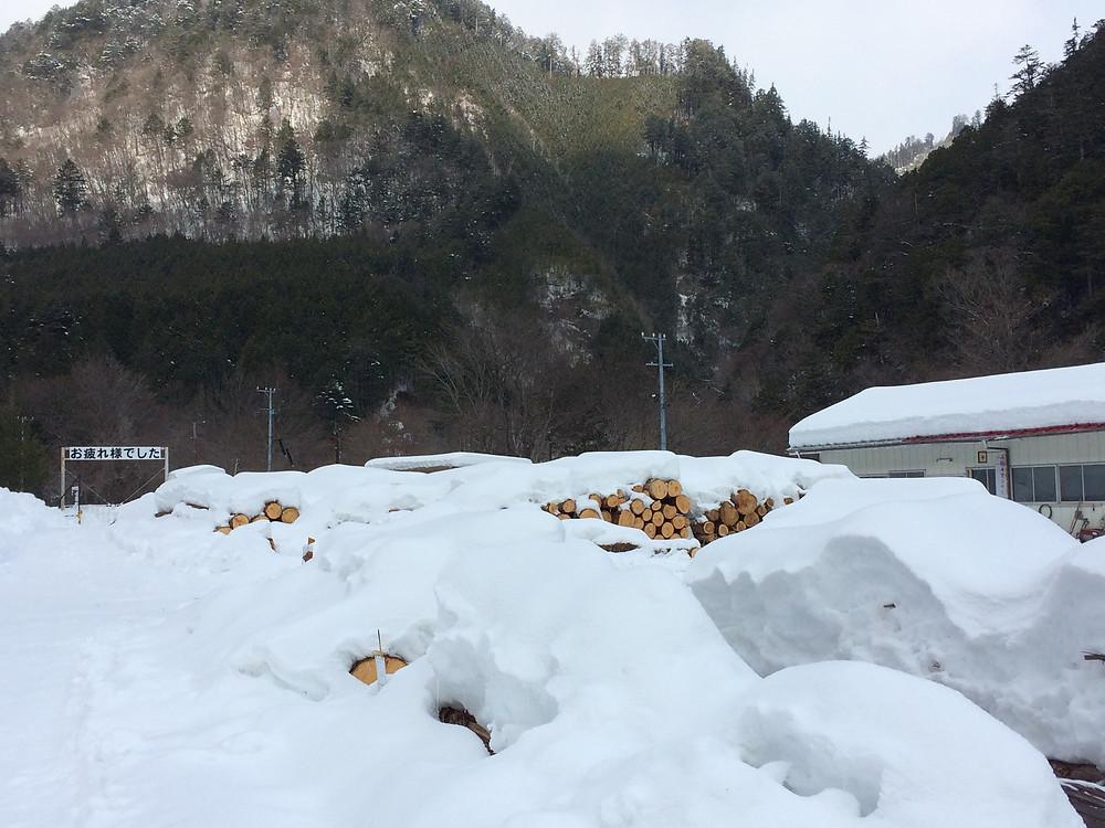 雪に埋もれる原木