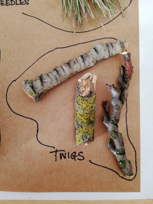 Sensory Forest Tray - Twigs