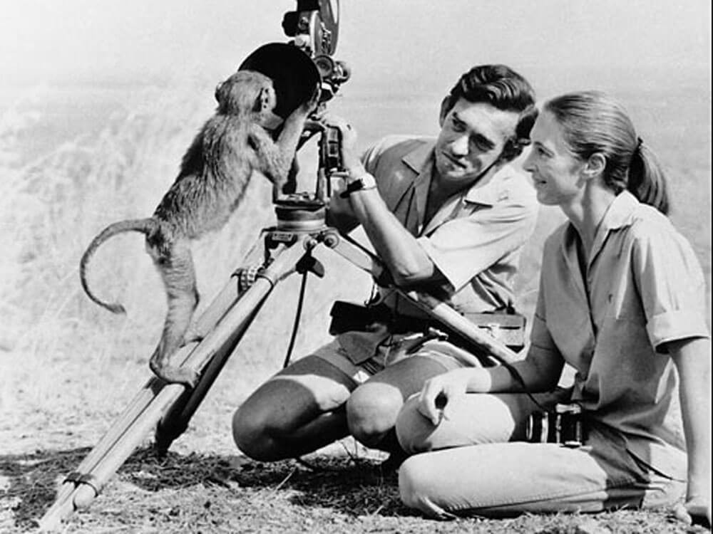 A baby chimpanzee looks into Hugo Van Lawicks camera while Jane Goodall watches