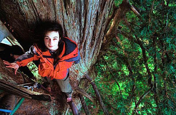 Julia Butterfly Hill in Luna the 180 foot tree