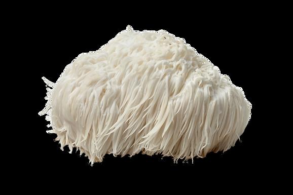 Lionsmane Mushroom