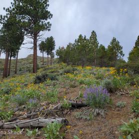 Ash Canyon Hike: A Real Trip!
