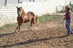 galvez caballo