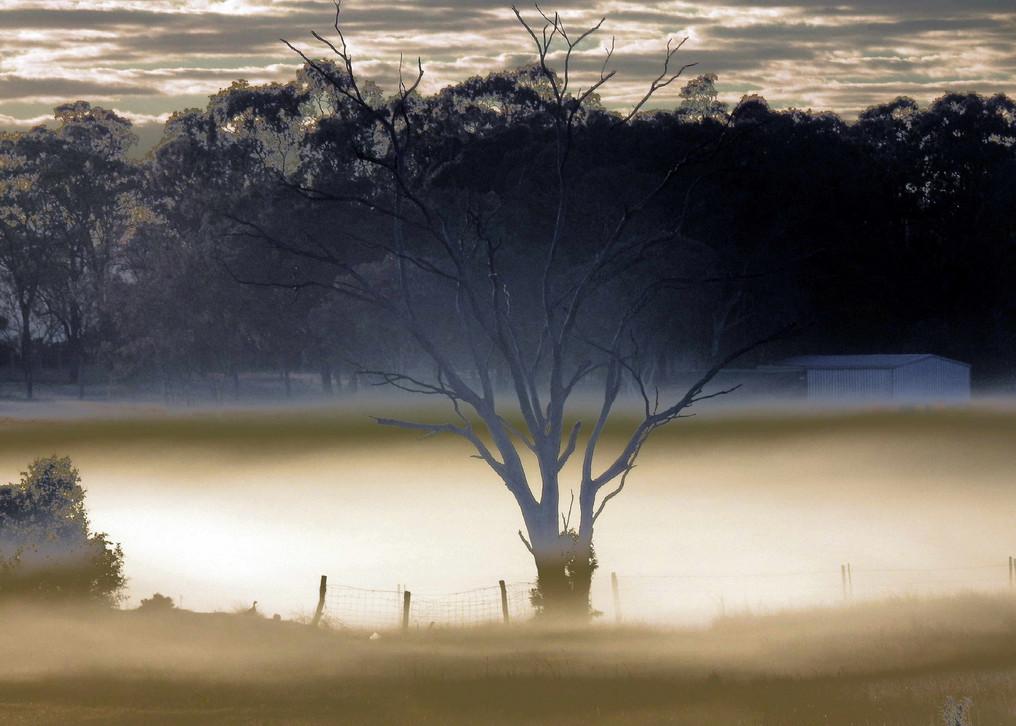 Favourite Paddock Tree, Jean Gundry