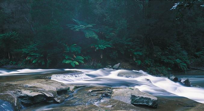 The stunning Otway Ranges National Park