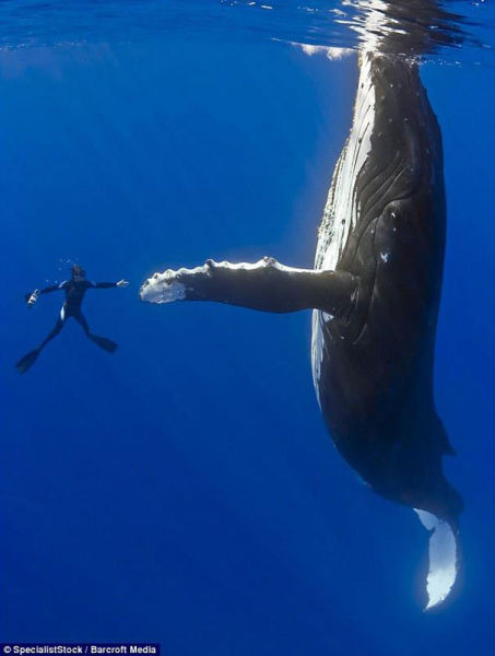 diver-whale-high-five-perfect-timing-1