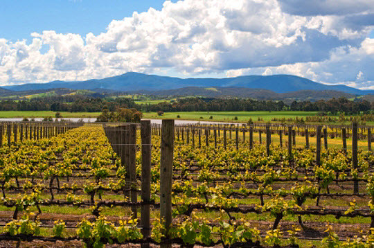 The stunning Domaine Chandon Winery , Yarra Valley