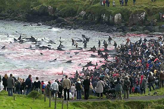 whaling-massacre-faroe-islands