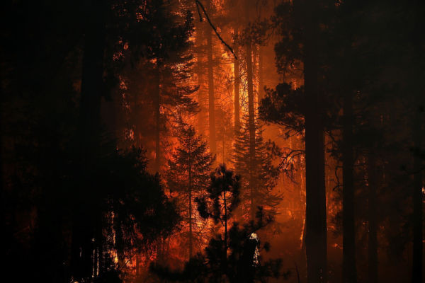 GROVELAND, CA - AUGUST 24:  Firefighters douse a spot fire as they battle the Rim Fire on August 24, 2013 in Groveland, California. (Photo by Justin Sullivan/Getty Images)