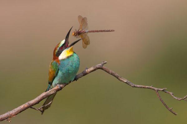 huntingbird-934x