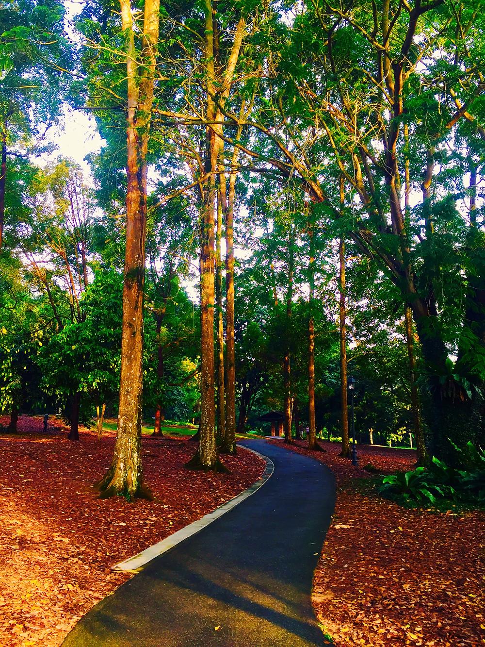 Singapore Botanical Gardens - a short stroll away.